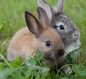 rabbitdiettile